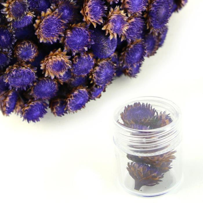 Fiori Color Viola.M12 Fiori Secchi Decorativi Viola